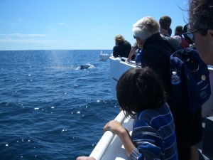 8 b) Here are dolphins!
